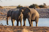 03elefanten-am-wasserloch_lbb