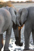20zwei-elefanten_lbb